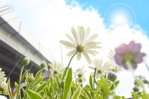 空と太陽と花の風景の写真