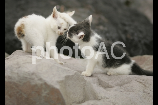 岩猫兄弟6の写真