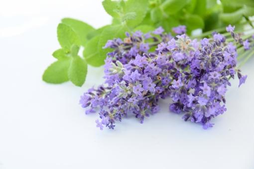 ラベンダー ミント ハーブ アロマ 白背景 白バック 花束 切り花