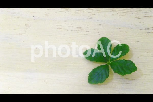 シュガーバインの葉の写真