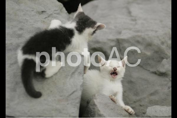 岩猫兄弟12の写真