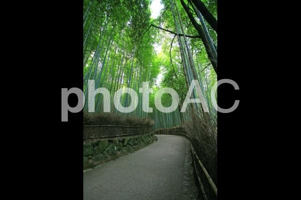 京都嵐山・竹林の小径5の写真
