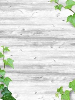 テクスチャ【ツタと白いウッドウォール04】の写真