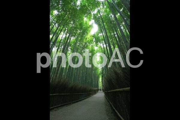京都嵐山・竹林の小径4の写真