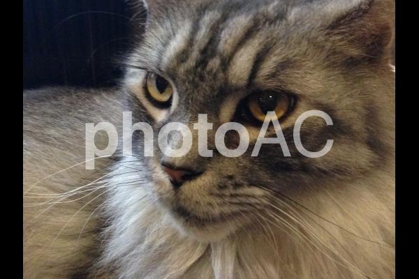 キリッ!とした猫の写真