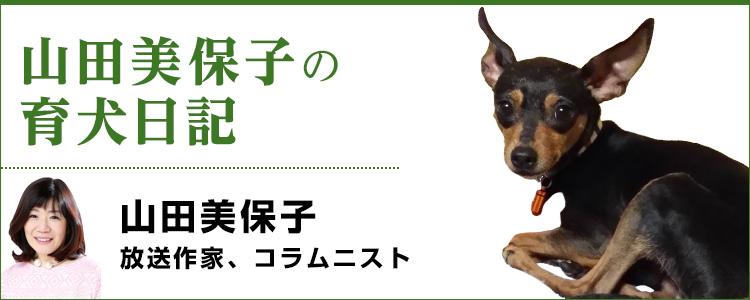 山田美保子の育犬日記