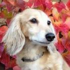 【写真特集】かぞくの肖像・うちの子 犬編