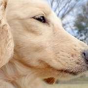 愛犬の供養、お骨はどうするのがよい?3つの方法。
