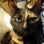 「くしゅん!」猫にも花粉症? 愛猫のために除去対策