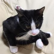 先住リス「りすお」に近づきたい甘えん坊猫「うなぎ」
