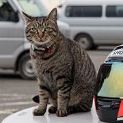 サーキットの人気者「桶川猫」はみんな迷い猫だった