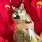 ペットと人の関係、命と向きあって考えてみた 農業高校の生徒が「猫カフェ」訪問