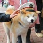 海外でも人気の秋田犬、観光誘致の「顔」に 最大ターゲットは台湾