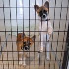 第46回 幸せに「卒業」できる犬が増えますように! 4カ所目の保護犬譲渡センターをオープン