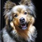 とても甘えん坊だった犬たろう、今では立派な番犬に成長!(オンリーわん&おんりーニャン)