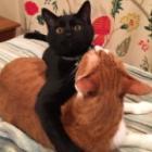 いたずら猫の禁じられた遊び ティッシュ、お風呂、台所…懲りない黒猫「龍」