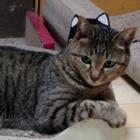 福島の置き去り猫から生まれた日向子(ひなこ)。今は新しいおうちで幸せ!