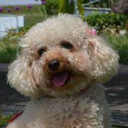 飼い主と犬には「親子のような絆」。最新研究で証明