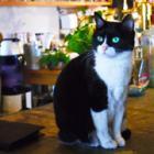 これぞ猫の恩返し! ワインバーの店長猫「ひじき」、遠くから訪ねる客もたくさん