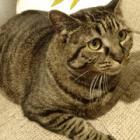 空気を読み過ぎる猫 号泣する飼い主にそっと寄り添い、翌日までも