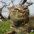 """自然のままに暮らす""""縁側ネコ"""" 強く、かわいい里山での暮らし"""