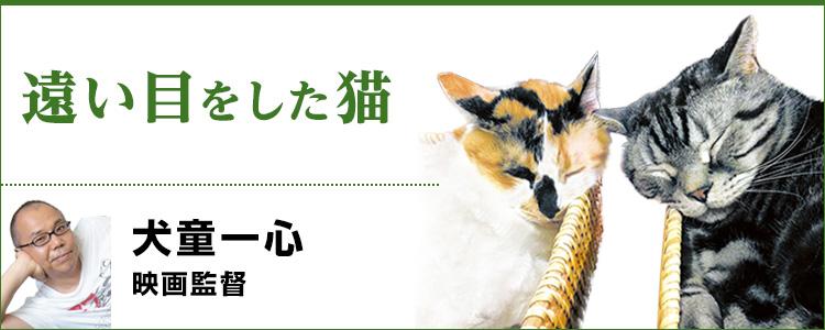 遠い目をした猫 映画監督・犬童一心