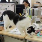 猫連れ通勤可、オフィス内を猫が闊歩、「猫手当」も… 猫に超優しいIT企業