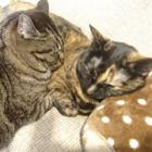 「猫アレルギーですけど」で人気 「あんず」と「モモ」