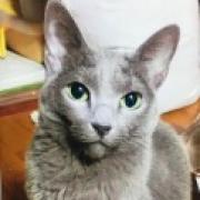 謎の猫「ロッシ―」が新しい家族へもたらした変化