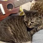 ウクレレを抱いた私を見て、猫が逃げ出した! 猫と趣味で優雅な暮らし?