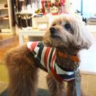 犬も歩けば宇宙ネタざんまい!? 愛犬ぷりぷりと「ワンコの聖地」、駒沢公園散歩