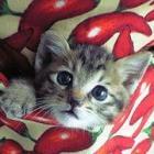 祭りの夜、聞こえた猫の声 命を救った子猫が大きく変えた、その後の人生