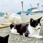 野良猫との理想の関係は……? 九州の「相島」、干渉しない絶妙な距離感
