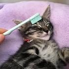 第53回 母猫になめてもらってうっとり…子猫の幸せな記憶を呼び覚ますブラッシング!