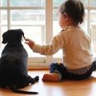 「動物愛護と青少年の教育を考える」シンポジウムにご招待