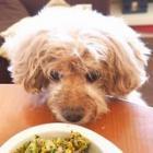 美味しそうにパクパク! 愛犬が「手作りごはん」で快食快便、すっかり元気に