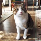 ガリガリ、瀕死の状態で保護した猫 魔法のように快復、イケメンに
