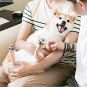 人気のふわもこ柴犬「だいふく」の日常を聞きました