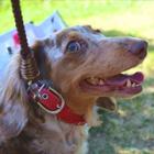 犬の飼い主のマナーに、飼い主以外の65%が不満 「トイレの後始末をしない」「吠える犬を放置」…