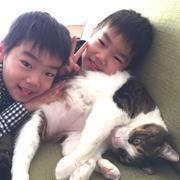 体重10キロ、巨大な猫。島から来た「島男」