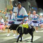 踊らにゃ損々、天へ届け 盲導犬と事故死したリーダーに捧げる阿波踊り 視覚障害者らが参加