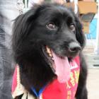 飯舘村の復興シンボル! へこたれず挑戦し続け、救助犬になった「じゃがいも」、PR大使に任命