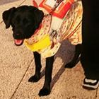 誕生日ケーキを買った直後、転落を知らされた妻「社会が変わる礎に」 盲導犬連れの男性死亡事故から1年
