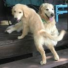 僕たちは、がんと闘っているお母さんの支え  マックス(左)とレックス
