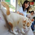 殺処分予定の子猫とふれあう「猫カフェ列車」、養老鉄道に登場 保護団体が協力、引き取りもOK