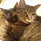 連載100回、猫への愛情は年々深まる? 子猫の頃の写真を探すと新たな発見が…