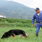 「警察犬」増える出動、その多くは行方不明者の捜索!? 予算も人手も足りなくて困ったワン