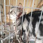 犬猫の「引き取り屋」事件 虐待容疑は不起訴に疑問