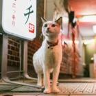 """猫はそこにいる! 日本の""""今""""を生きる猫たち ドキュメンタリーな猫写真展"""