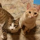 道路の真ん中でふるえていた子猫ジャッキー、居合わせた人々の「連係プレー」で奇跡の救出!